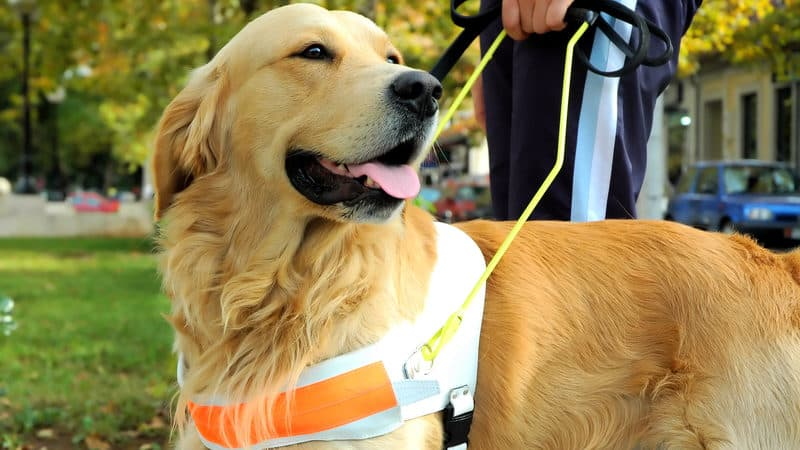 Hero dogs Image