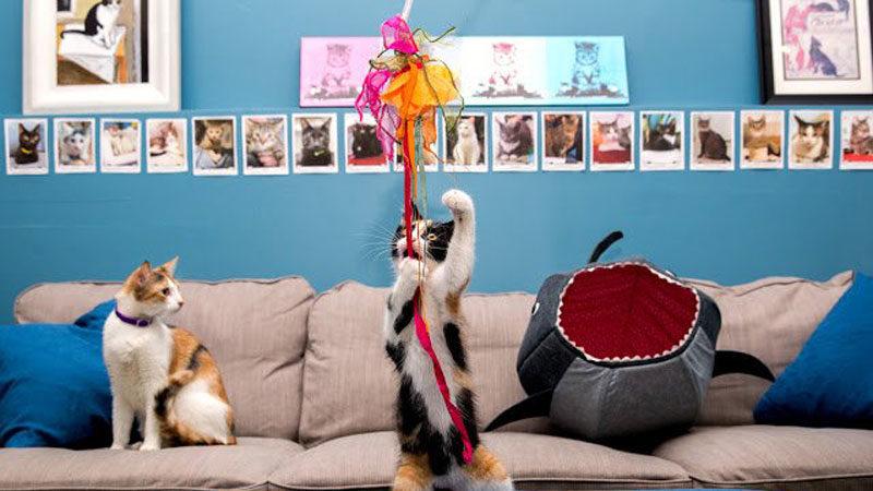 cat cafe Image