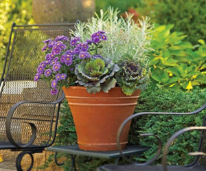 plant-year-round-containers