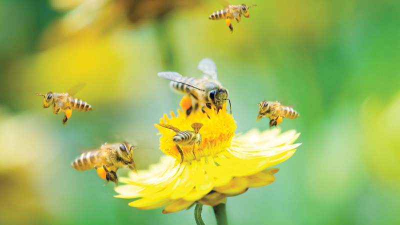 Attracting Pollinators Image