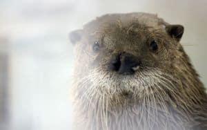 Maymont Park - New Otters Image