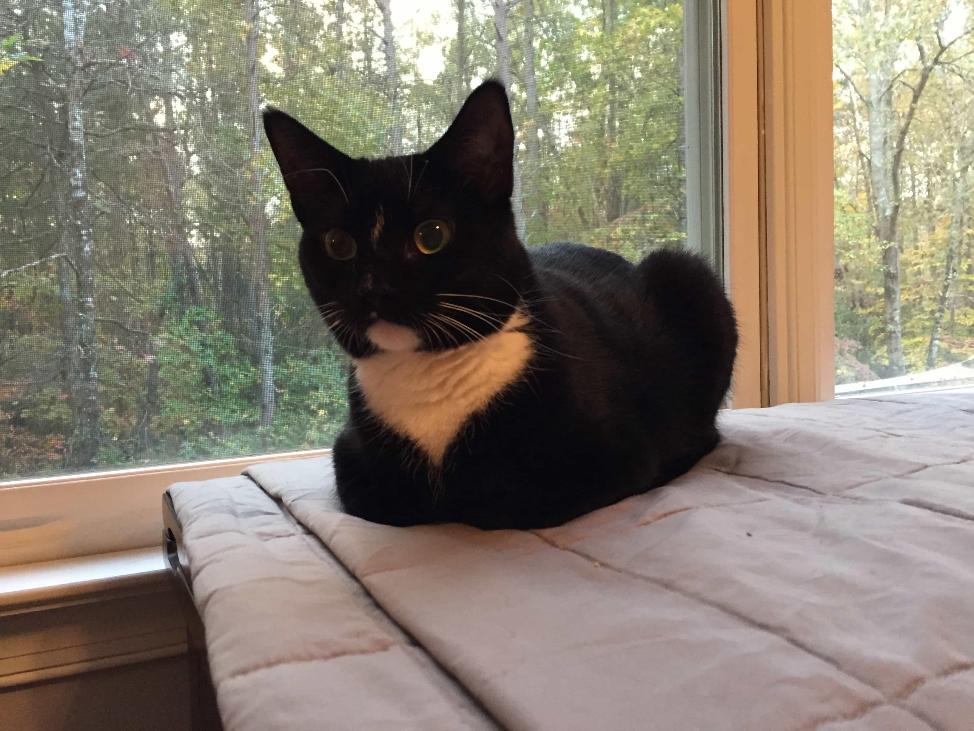 Foster Cat