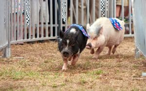 Chesterfield County Fair Image