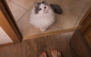 Abandoned Cat Image