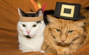 Thanksgiving cats Image