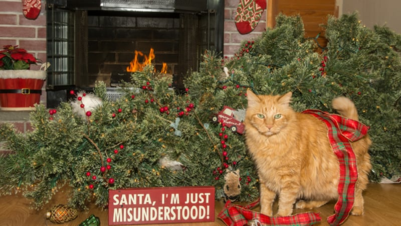 Naughty Christmas cat Image