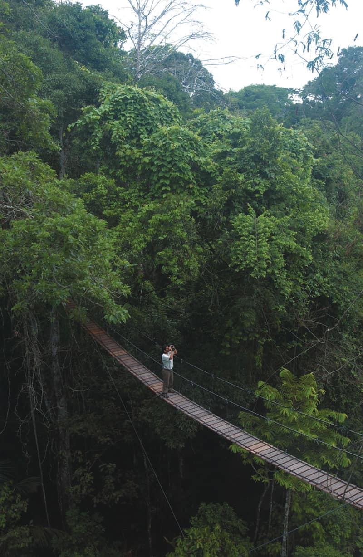 Amazon Brazil Peru