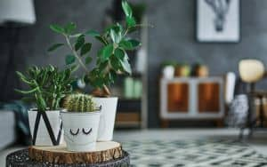 Houseplants Image