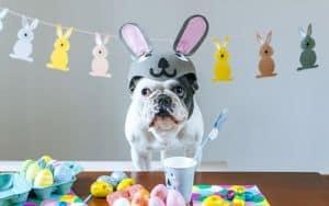 Easter_Dog Image