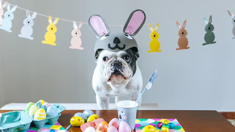Easter_Dog Image