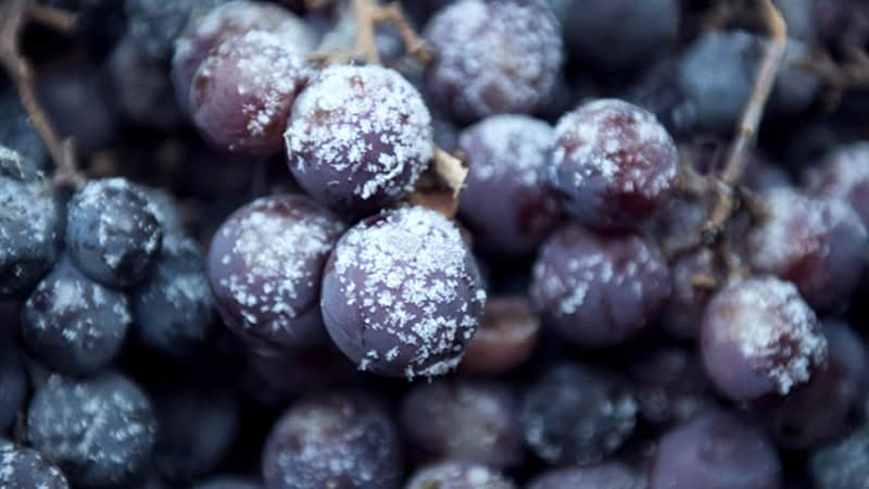 Snow Grapes Image