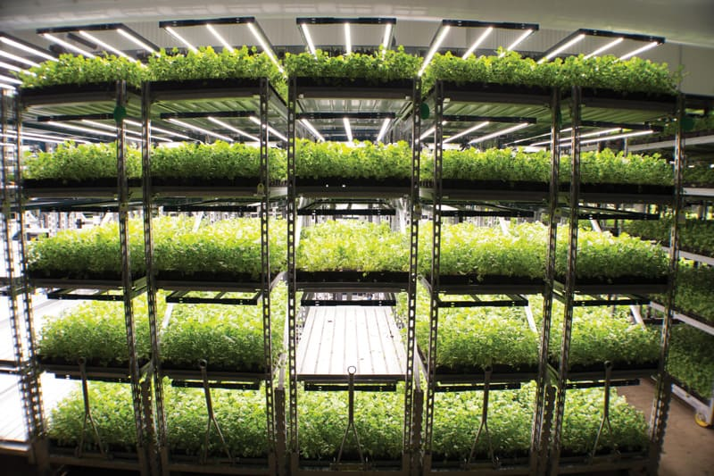 Vertical Farming | Photograph courtesy of Shenandoah Growers