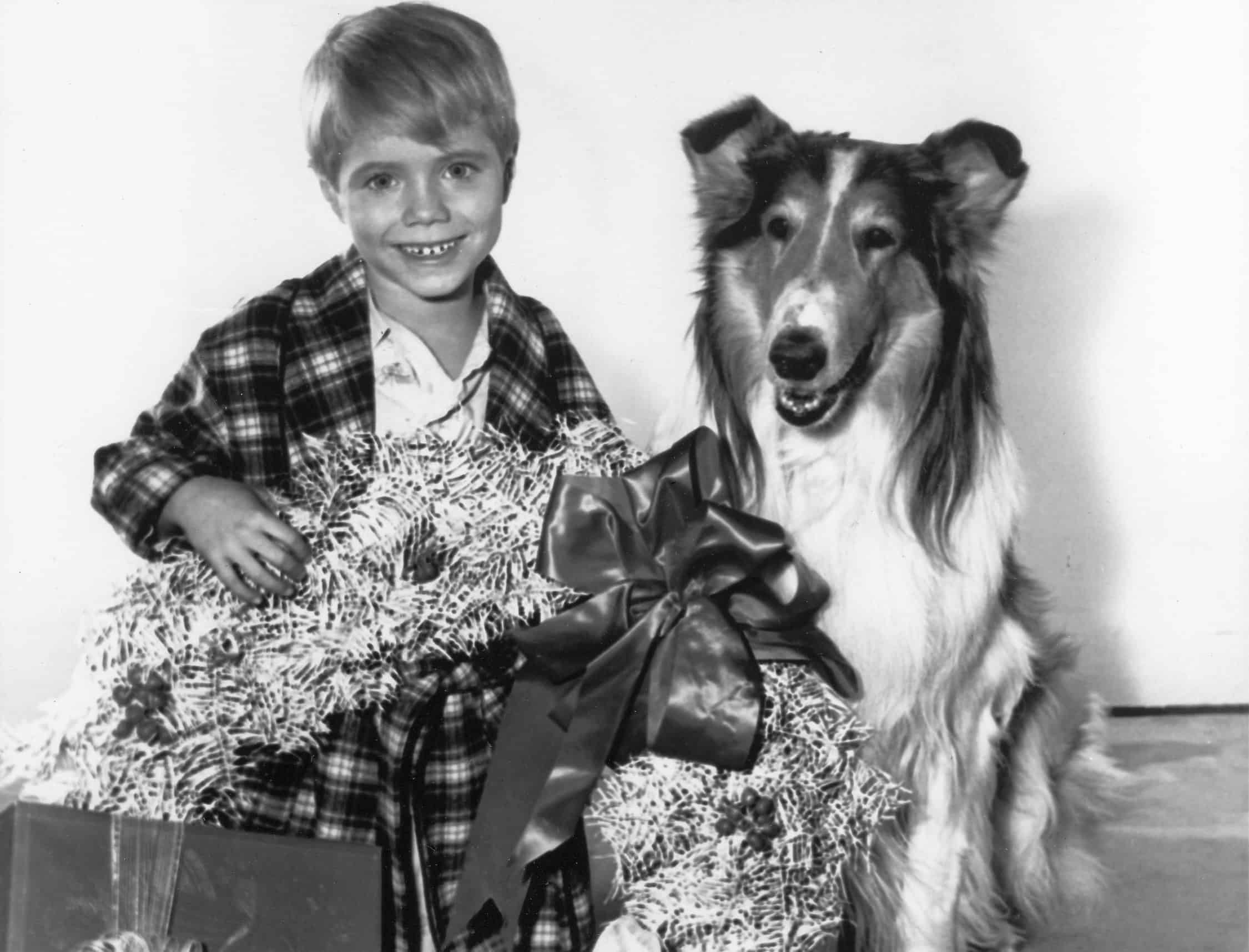 Jon Provost and Lassie pose for a Christmas episode