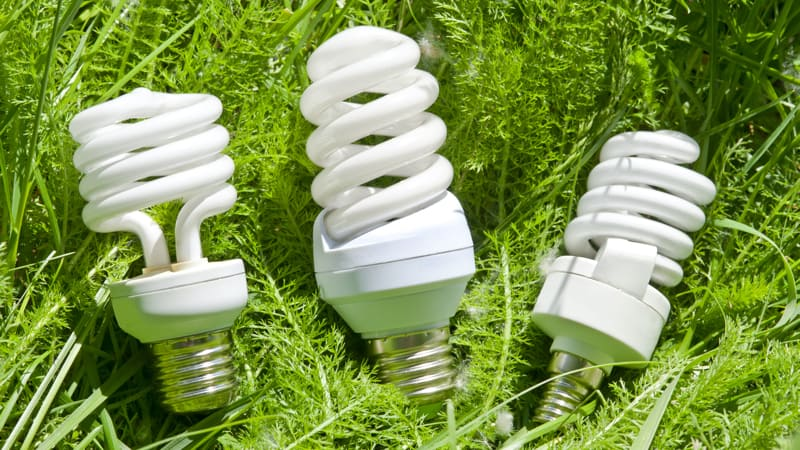 Energy efficient light bulbs on green grass show how environmentally friendly these bulbs are Image