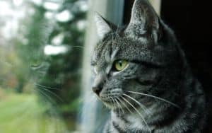 Indoor cat yearns for the outdoors but owner is unsure if it's a good idea Image