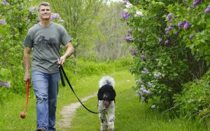 Handsome older man walking his dog among lush greenery Image