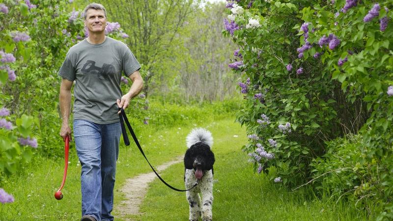 Handsome older man walking his dog among lush greenery Image