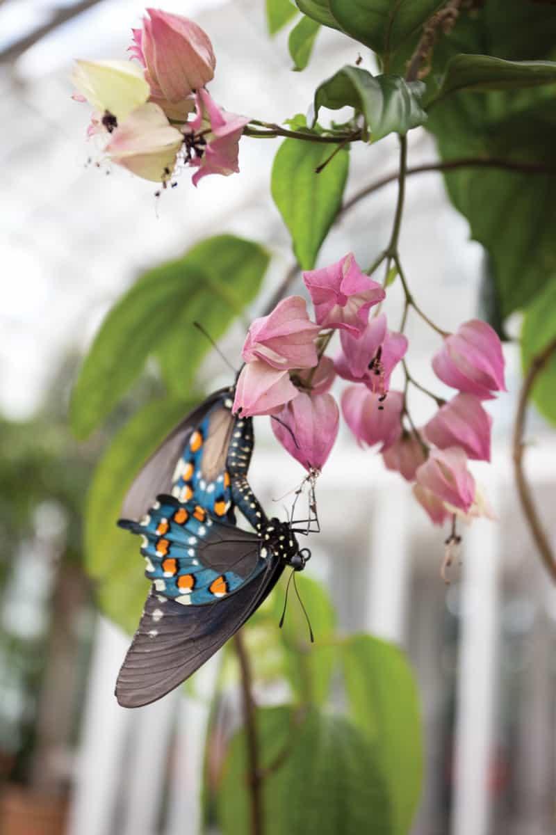 Butterflies LIVE! at Lewis Ginter Botanical Gardens