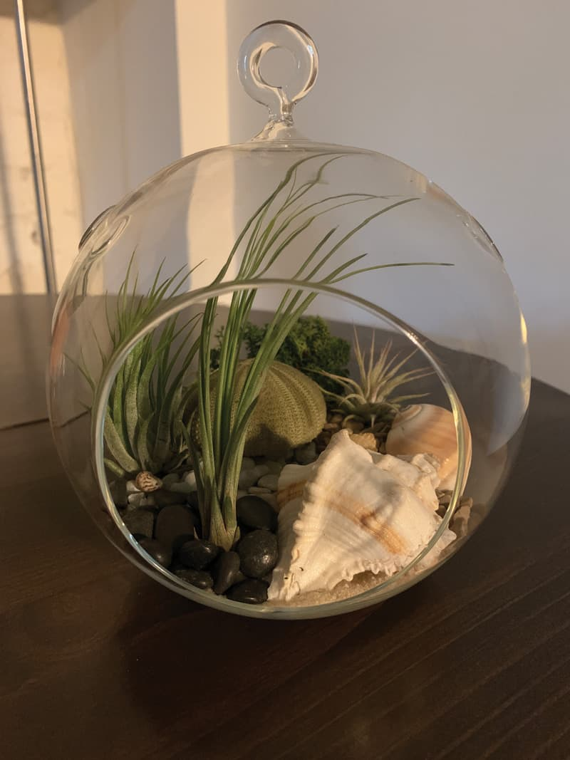 A plant thing made from PlantBar