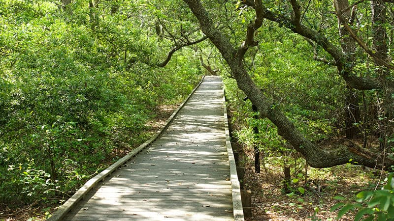 Boardwalk at the Outer Banks Image
