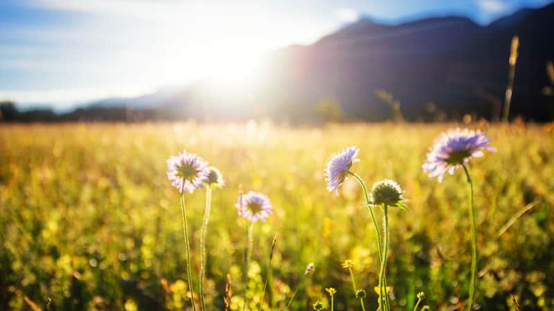 A field full of sunshine and joy Image