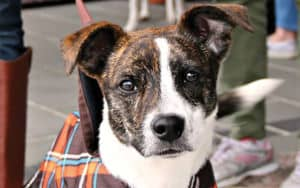 Terrier from dog adoption agency Image