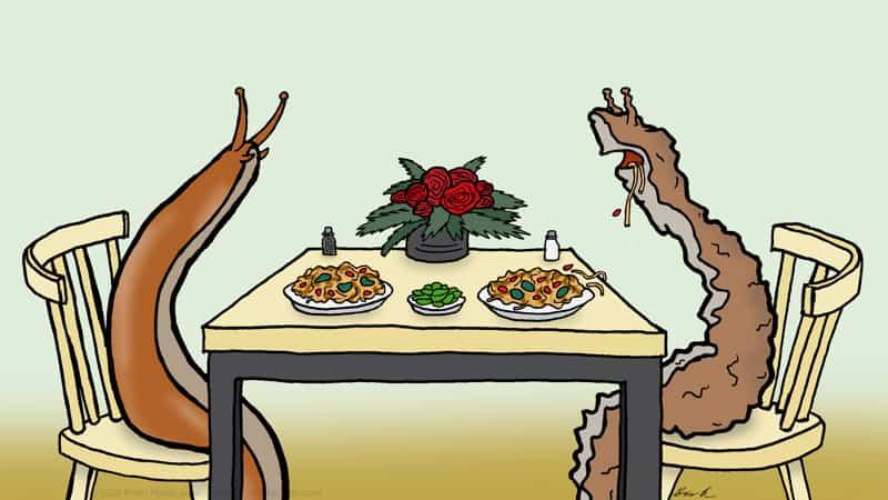 Slugs dining out Image
