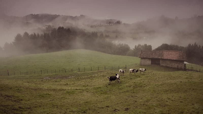 A vintage farm with cows in a pasture Image