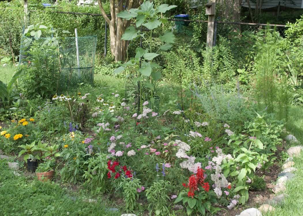 backyard garden for birding in a pandemic