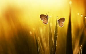 butterflies in the morning dew, reflecting the possibilities after caregiving ends Image