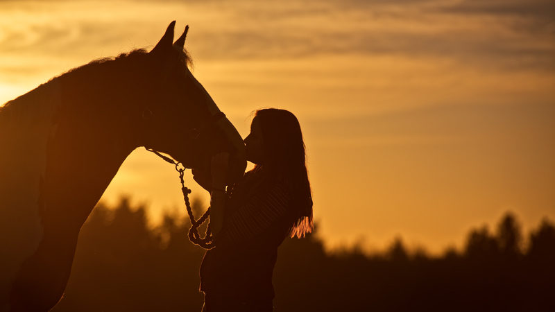 Horse and young woman against a sunset, showing the bond between girls and horses Image
