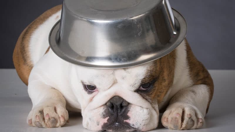 dog with food bowl on head for advice on pet issues Image