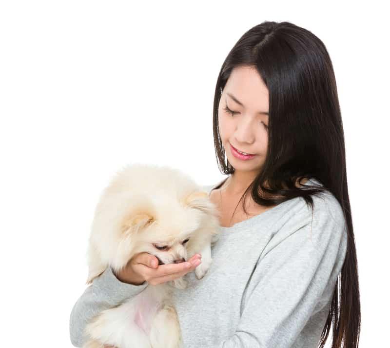 Woman loving a Pomeranian dog