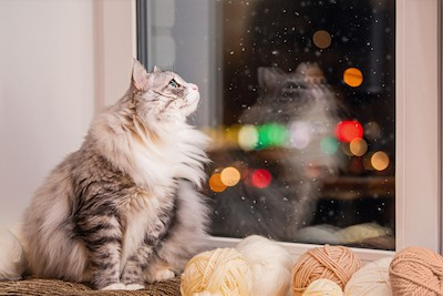 Cat looking wistfully outside at night