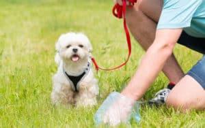 man picking up dog poop while small fluffy dog looks on. Dog Poop Bag Pushback Image