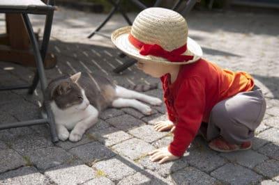 Little toddler girl bending down to pet a cat