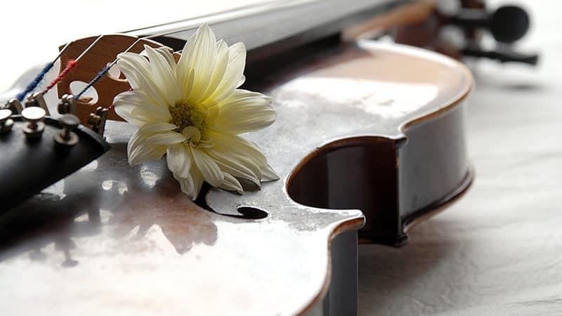 Flowers on violin Image