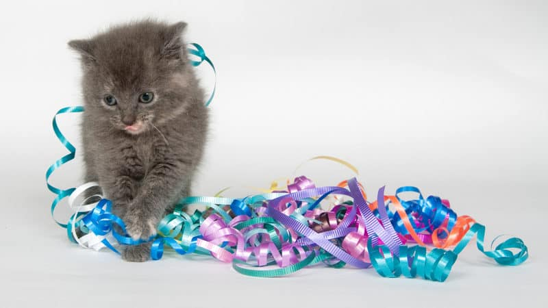Kitten showers Image