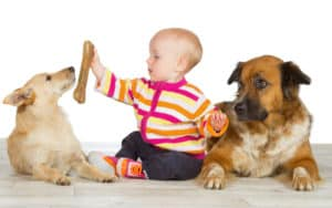 two dogs and a baby - martina osmy dreamstime Image