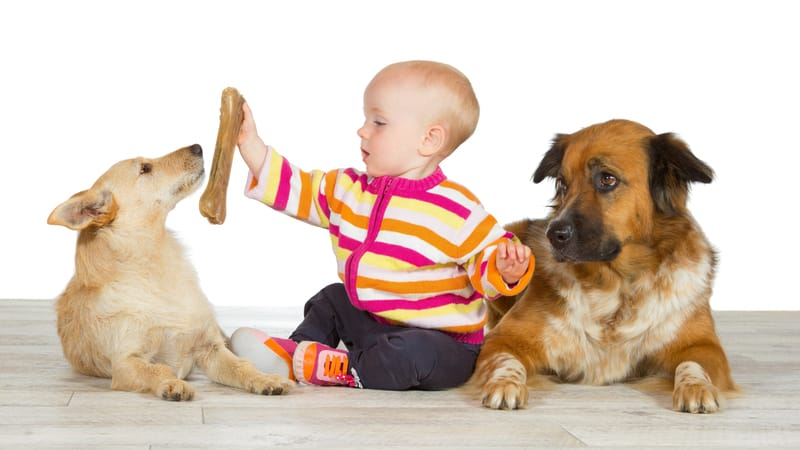two dogs and a baby - martina osmy dreamstime