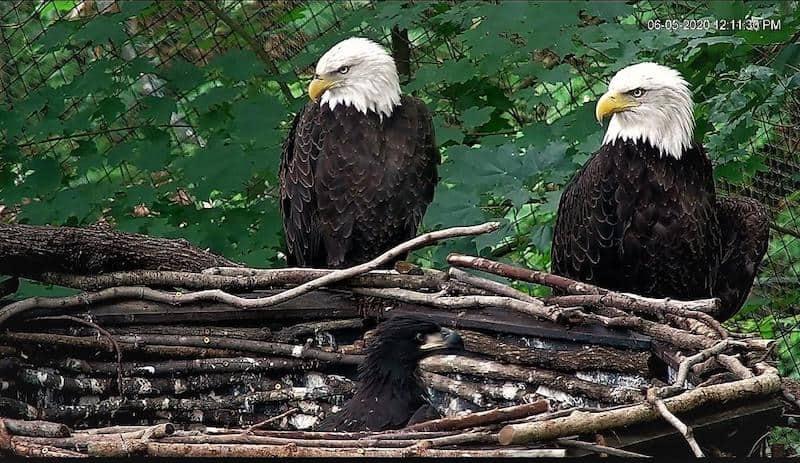 Dollywood eagle foundation