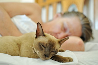 cat and owner peacefully asleep on the bed