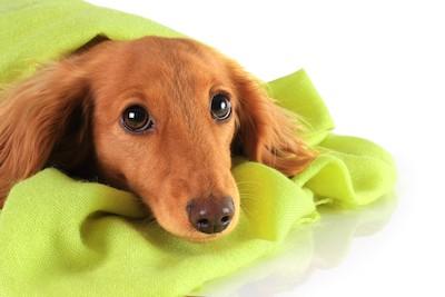 cuddly dog, credit Barbara Helgason Dreamstime