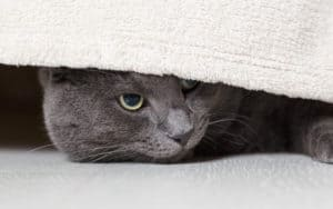shy cat under a bed GCapture Dreamstime - Making a loving home for a shy cat Image