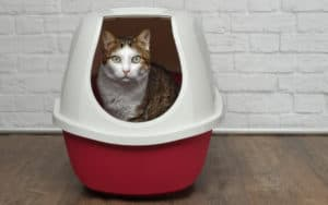 Roommate will not clean out this litter box Image