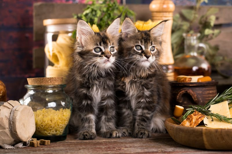 Two kittens in a kitchen. Credit Lilun Dreamstime