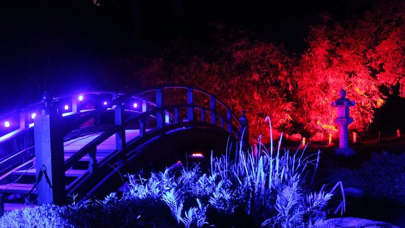 Japanese Garden during Garden Glow at Maymont. Image courtesy of Maymont for What's Booming Image