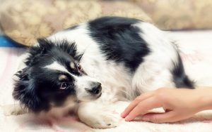 A scared dog. Credit Dashabelozerova Dreamstime. For article, Dog Is Still Scared a Year Later Image
